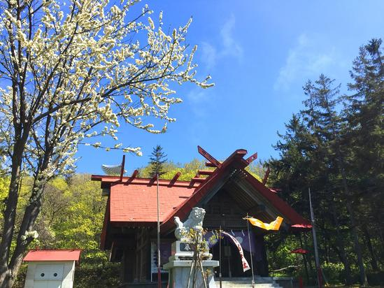 常呂神社 満開の白い花&網走市卯原内「丹頂鶴」