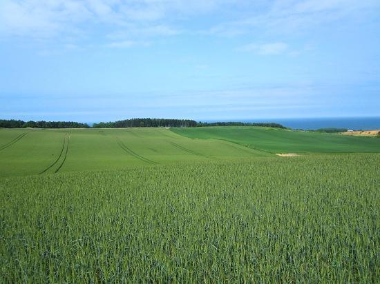 オホーツク海と能取湖が望める麦畑2 北見市常呂町