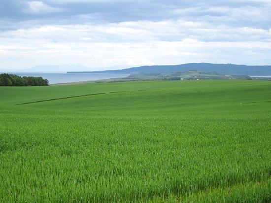 ホーツク海と能取湖が望める麦畑 北見市常呂町