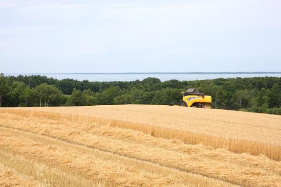 サロマ湖を望む麦畑 収穫の大型コンバイン
