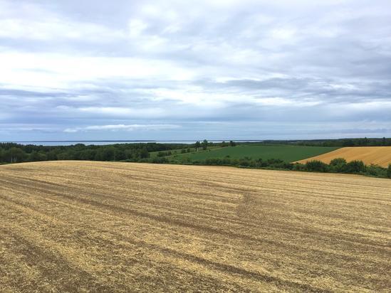 サロマ湖を望む麦畑 収穫後の畑作地帯