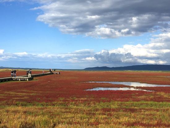 網走能取湖のサンゴ草