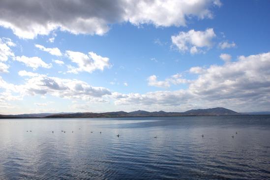 サロマ湖 白鳥 北見市常呂町栄浦